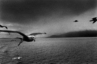 josef-koudelka-seagull-scotland-1977